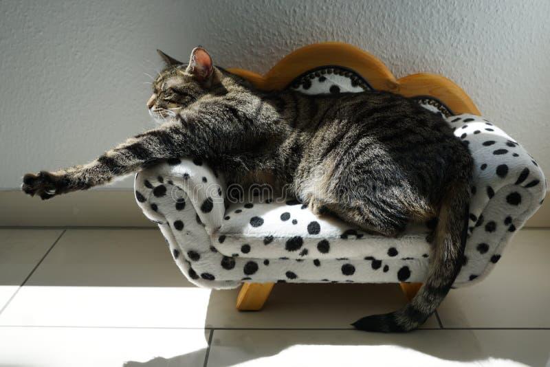 Gato de tigre cansado en un sofá dálmata imagenes de archivo