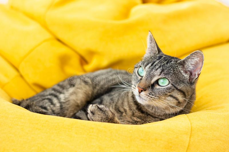 Gato de tigre lindo que miente en el puf amarillo brillante fotos de archivo