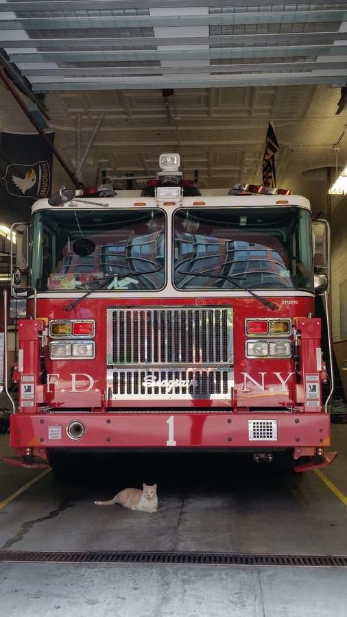 Gato debajo de un firetruck fotografía de archivo