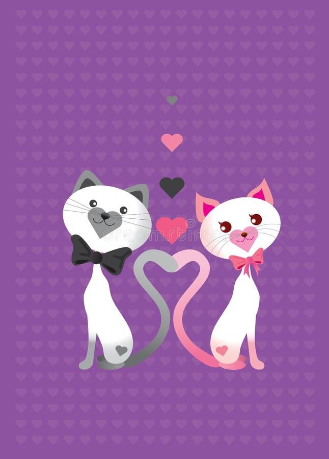 Gato Del Amor Imagenes de archivo