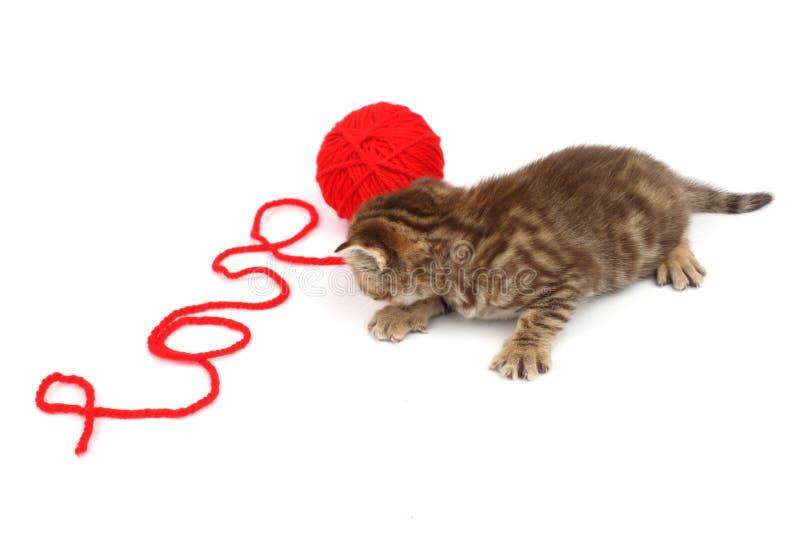 Gato Del Amor Fotografía de archivo
