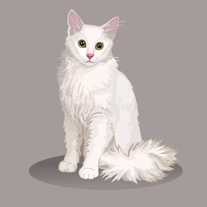 Gato del angora Raza del gato Animal doméstico preferido Gatito mullido precioso con los ojos verdes Ilustración realista del vec libre illustration