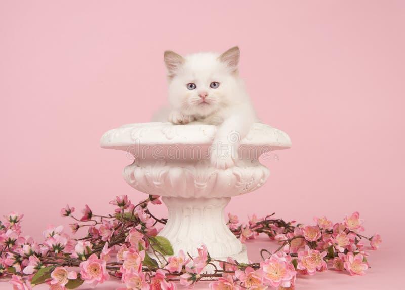 Gato del bebé de la muñeca de trapo con los ojos azules que cuelgan sobre el borde de una maceta con las flores rosadas en un fon imagen de archivo libre de regalías