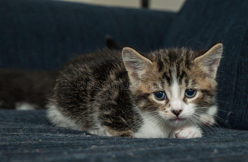 Gato del bebé que se divierte foto de archivo