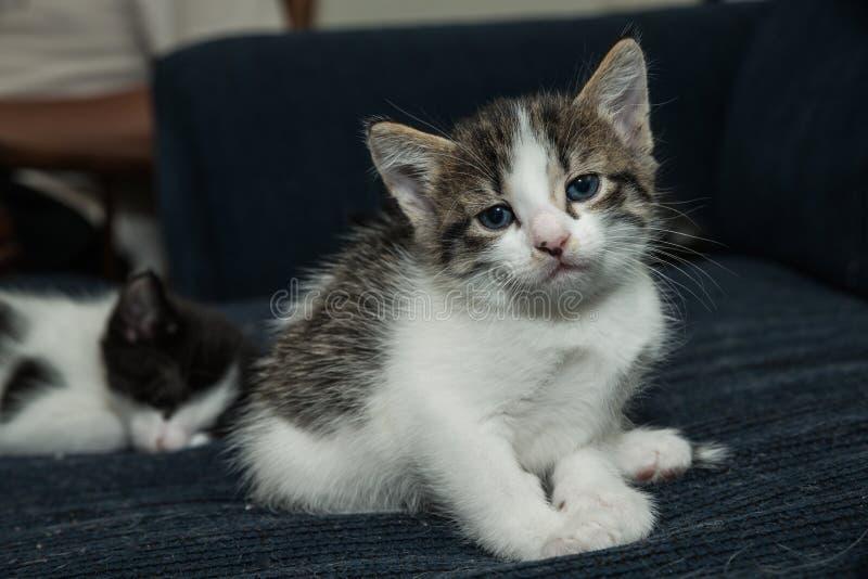 Gato del bebé que se divierte imagen de archivo libre de regalías