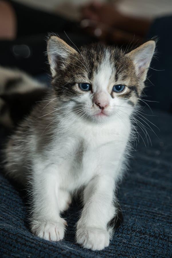 Gato del bebé que se divierte fotos de archivo libres de regalías