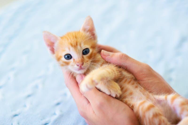 Gato del beb? Gatito del jengibre que juega en casa foto de archivo
