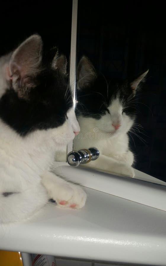 Gato del espejo fotografía de archivo