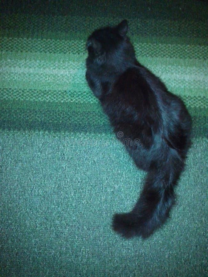 Gato del gatito fotografía de archivo