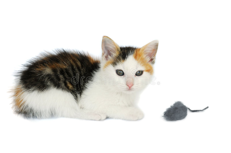 Gato del gatito con el juguete del ratón fotografía de archivo