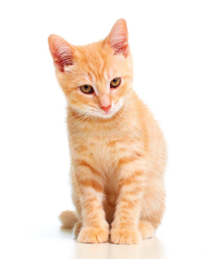 Gato del gatito del jengibre fotografía de archivo