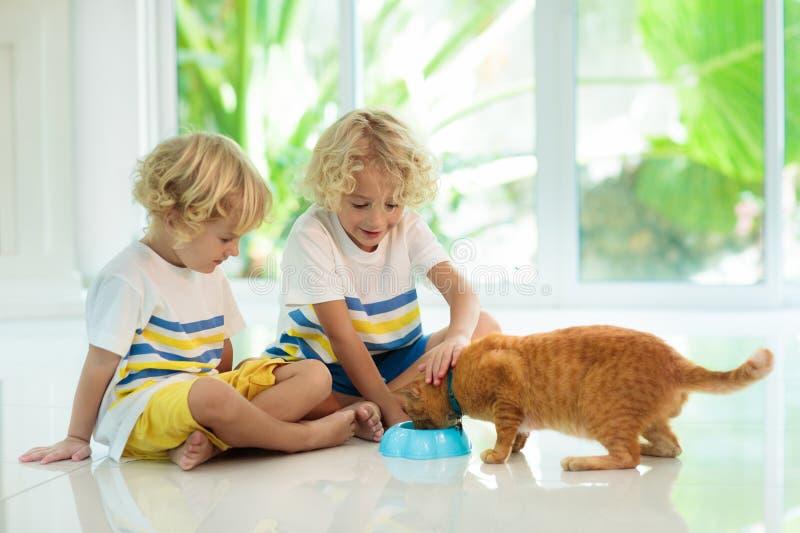 Gato del hogar de la alimentación infantil Niños y animales domésticos fotos de archivo libres de regalías