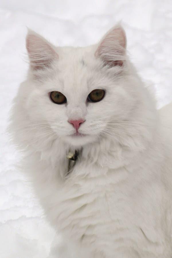 Gato del invierno imagenes de archivo