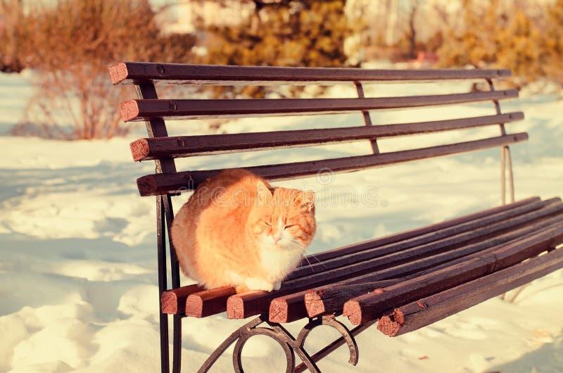 Gato del jengibre al aire libre en invierno imágenes de archivo libres de regalías