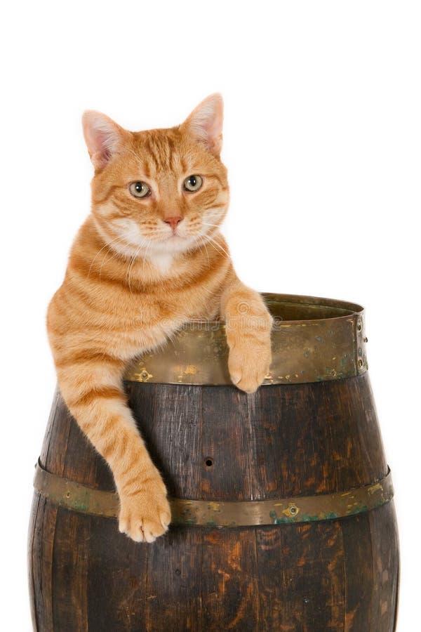 Gato del jengibre en un barril de madera imagen de archivo