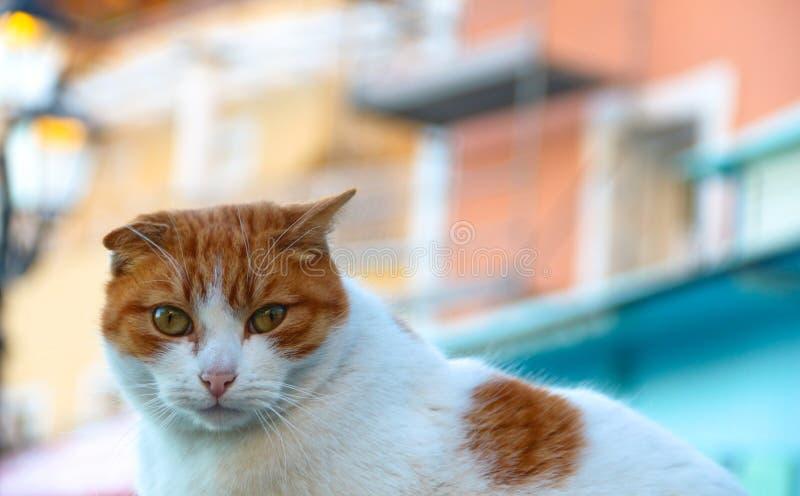 Gato del jengibre en una calle de Positano, Italia fotografía de archivo libre de regalías