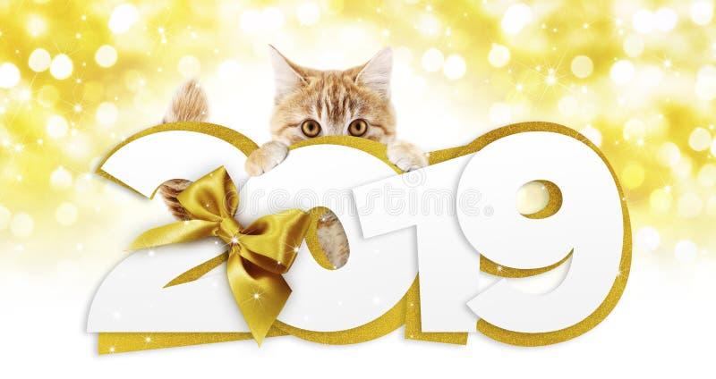 Gato del jengibre que muestra el texto de la Feliz Año Nuevo 2019 con la cinta de oro b foto de archivo