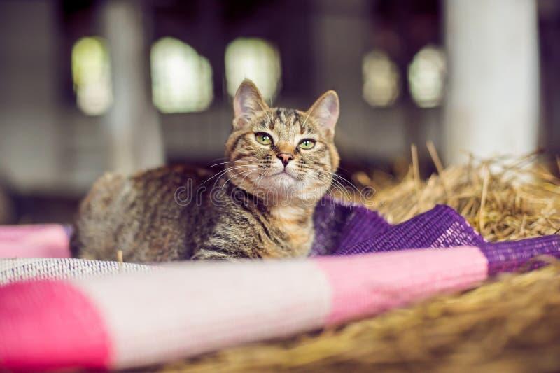 Gato del pelirrojo en el heno en el pueblo foto de archivo libre de regalías