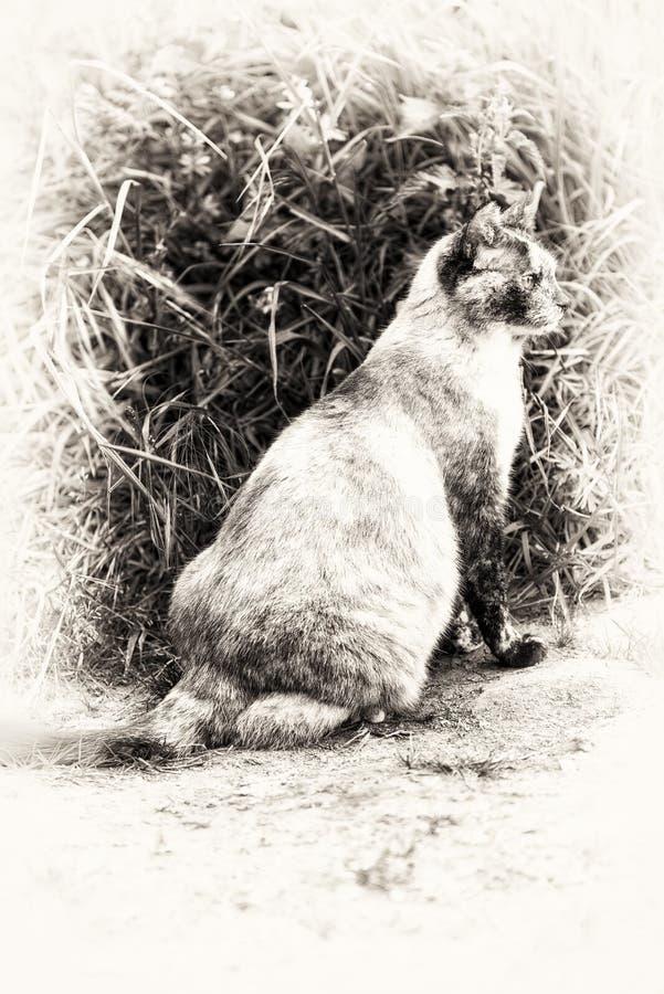 Gato del punto del color del tortie que se sienta y de vagabundeo fotos de archivo