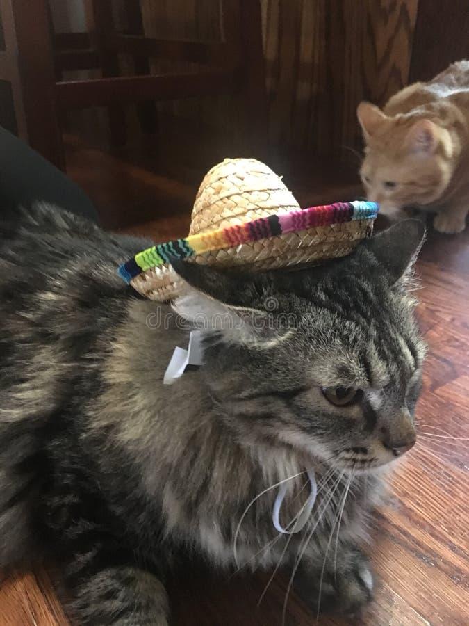 Gato del sombrero fotografía de archivo libre de regalías