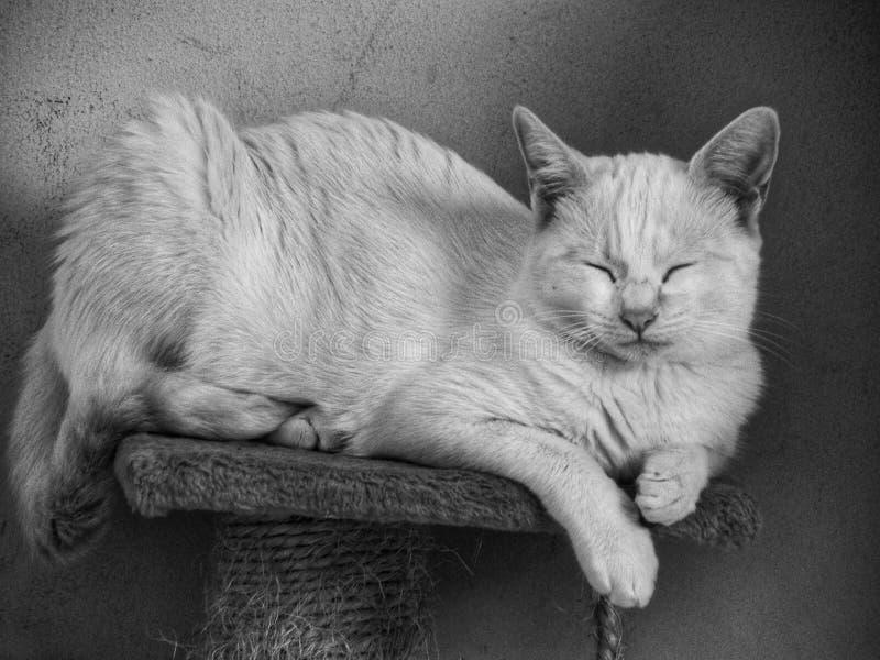 Gato del sueño en casa imagenes de archivo
