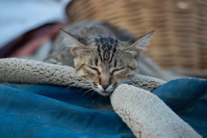 Gato del sueño que duerme en una manta doblada en un día caliente al aire libre foto de archivo libre de regalías