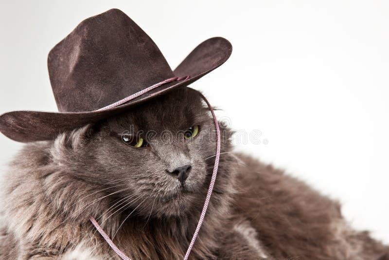 Gato del vaquero foto de archivo libre de regalías