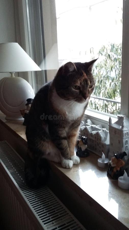 Gato delante de la ventana imagen de archivo libre de regalías