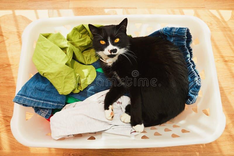 Gato dentro na cesta de lavanderia imagens de stock royalty free