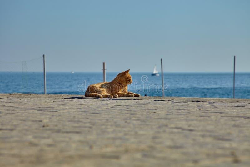 Gato desabrigado do gengibre que toma sol no sol no seacoast foto de stock royalty free