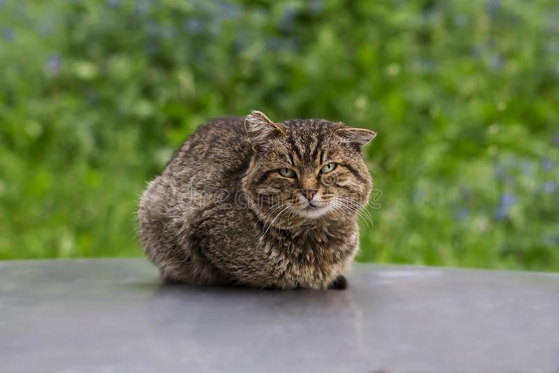 Gato desabrigado na rua fotos de stock royalty free