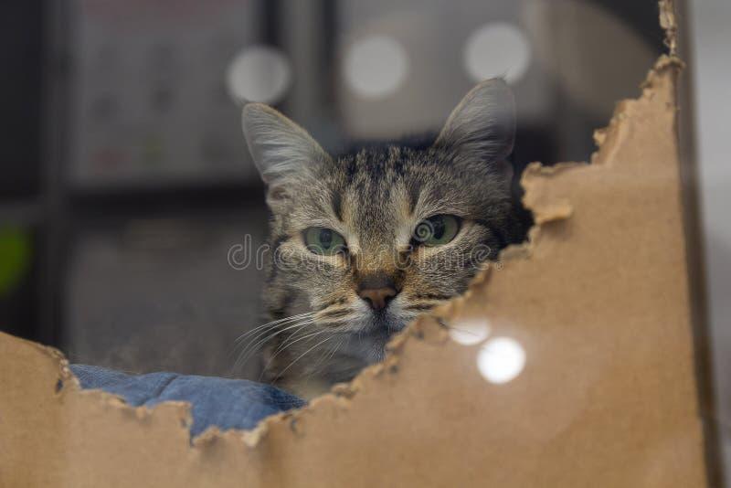 Gato desabrigado no abrigo atrás do vidro imagens de stock royalty free