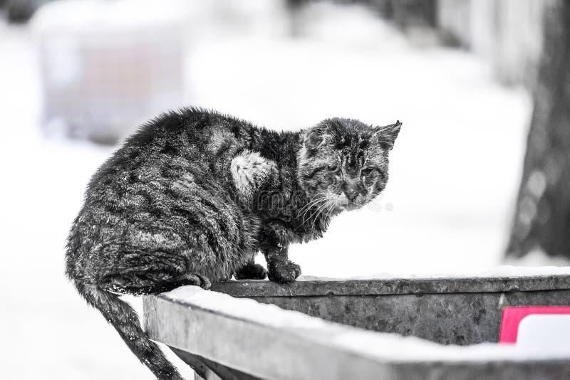 Gato desabrigado que procura o alimento imagens de stock royalty free