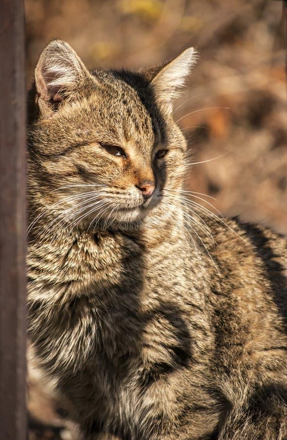 Gato detrás de la cerca del hierro imagenes de archivo