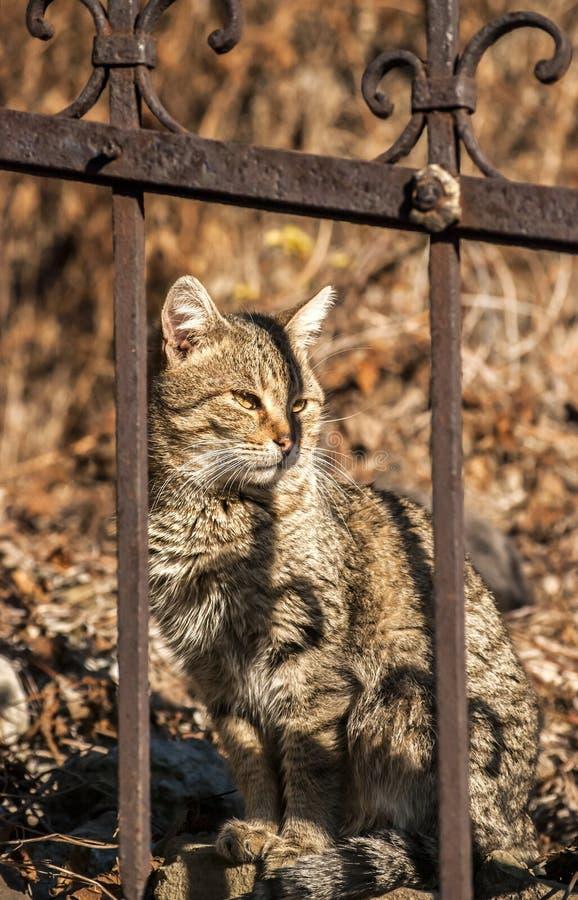 Gato detrás de la cerca del hierro fotografía de archivo libre de regalías