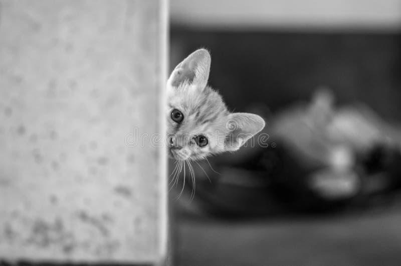 Gato detrás de la pared imágenes de archivo libres de regalías