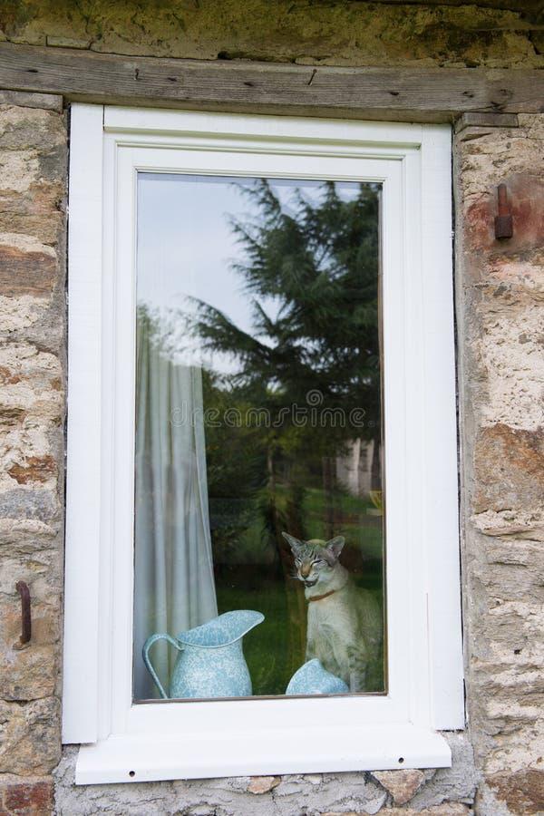 Gato detrás de la ventana fotos de archivo