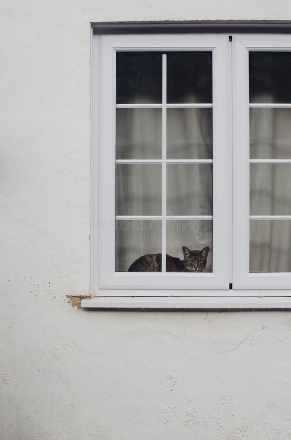 Gato detrás de la ventana imagen de archivo