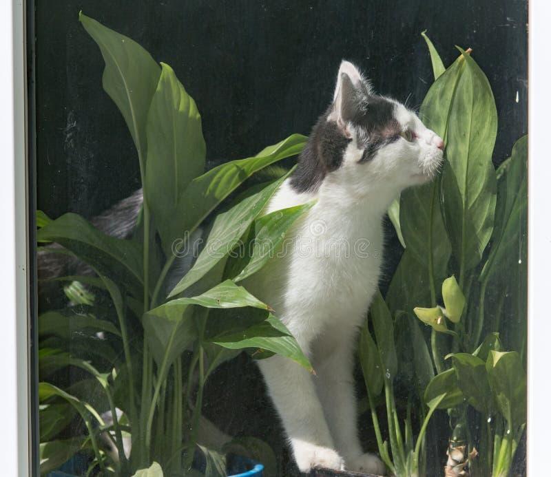 Gato detrás de una ventana de cristal imagen de archivo