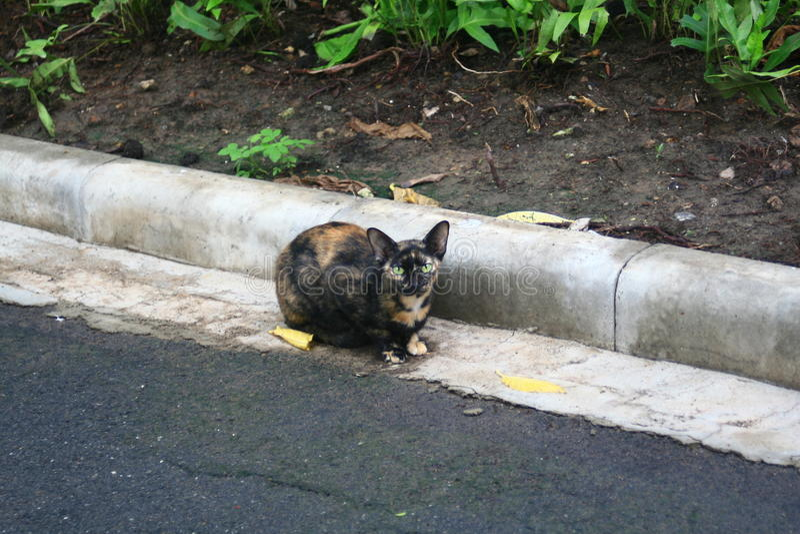 Gato disperso fotografia de stock royalty free