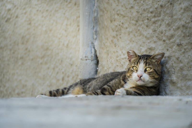 Gato disperso abandonado adulto que olha triste na câmera foto de stock royalty free