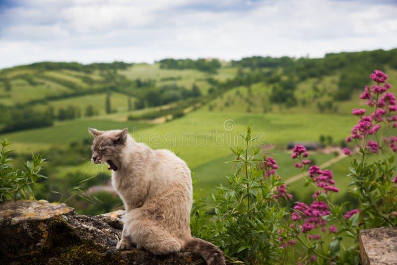 Gato disperso bocejo travado fora imagem de stock