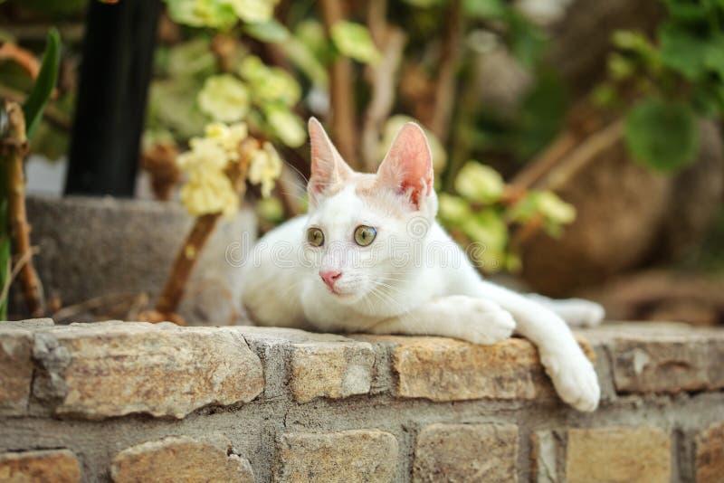 Gato disperso branco que descansa no freio do pavimento feito dos tijolos, das árvores do jardim e das folhas no fundo imagem de stock royalty free