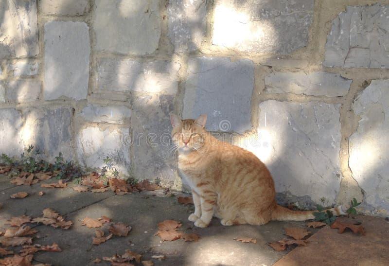 Gato disperso do gengibre - naranja do callejero do gato fotografia de stock royalty free