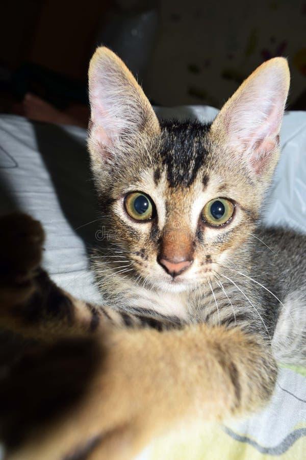 Gato disperso do selfie dos gatos fotografia de stock royalty free