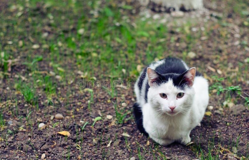 Gato Disperso Em Um Jardim Fotografia de Stock