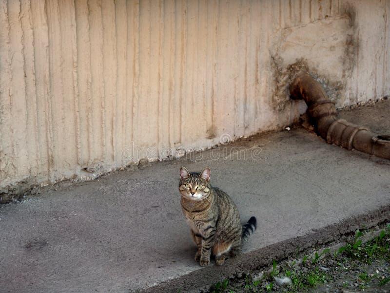 Gato disperso que senta-se pela parede foto de stock