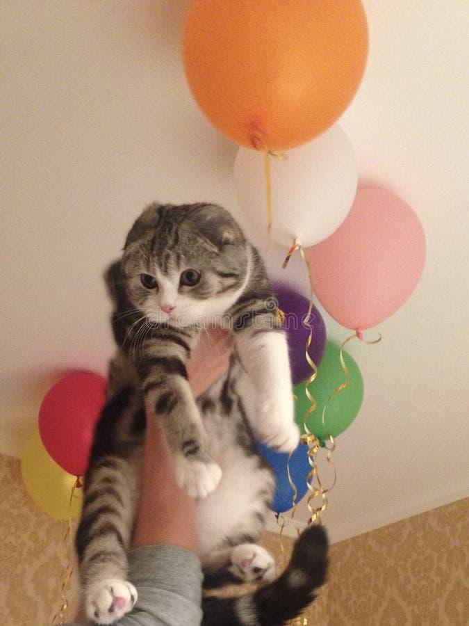 Gato divertido con los globos foto de archivo