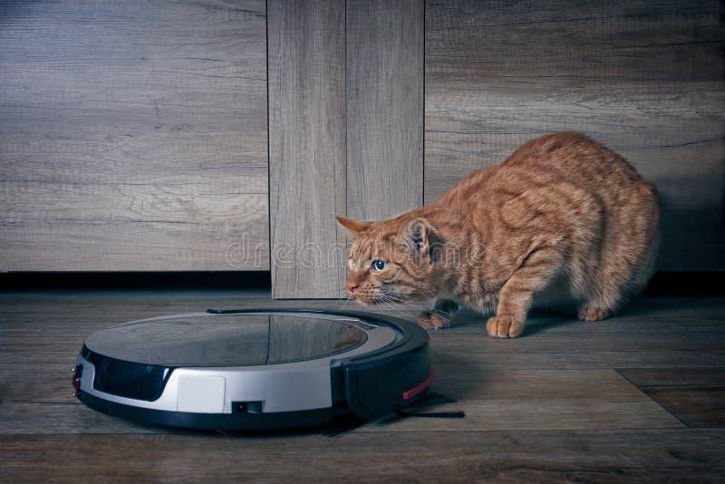 Gato divertido del jengibre que está al acecho detrás de un aspirador del robot foto de archivo libre de regalías
