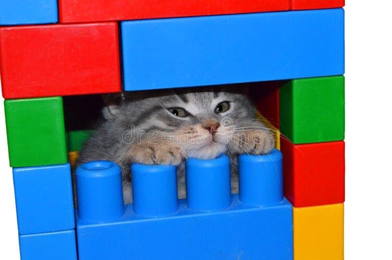 Gato divertido en cautiverio imagen de archivo libre de regalías